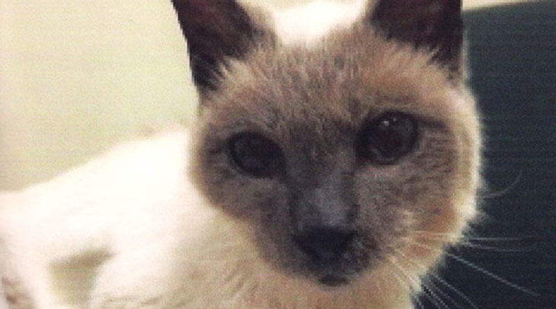 Scooter, briefly the world's oldest living cat, dead at 30