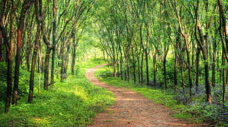 Midday haunting story of Evil spirits near Igorchem Bandh, Goa