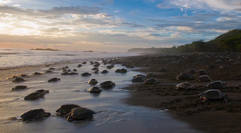 Rushikulya-Beach