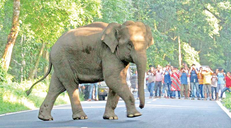 Wild tuskers entering in Lalgarh, villager agitated over forest department