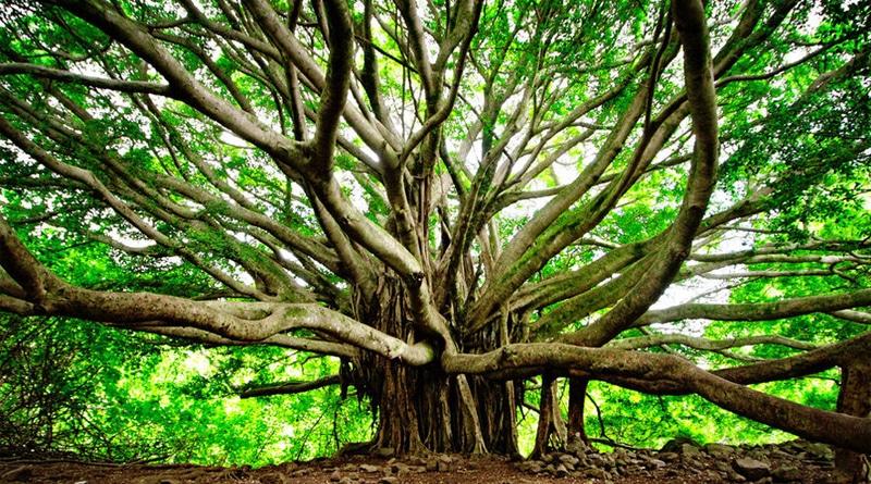 """""""Haunted tree"""" in Orissa village creates panic"""