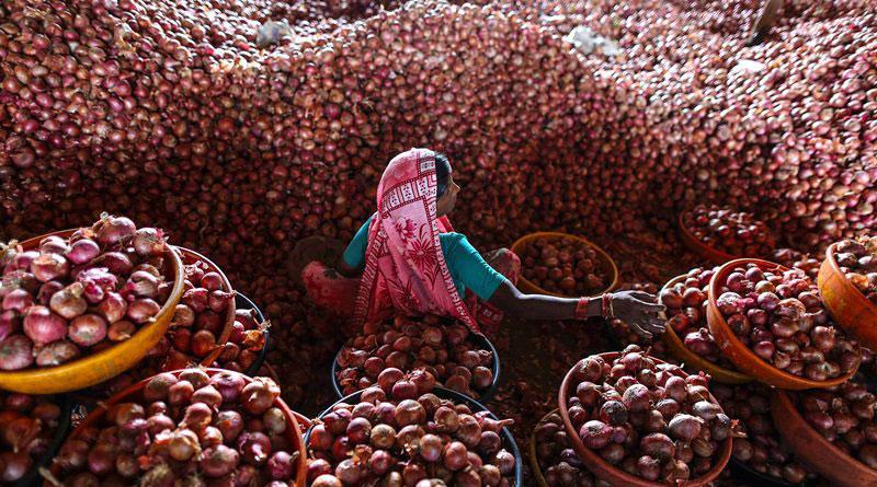 Rain & rot make onions free