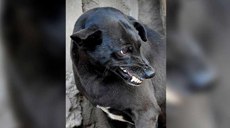 street dog sparks panic in Suri