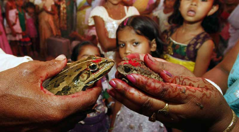 People in Jorhat organise a wedding of frogs to appease rain God