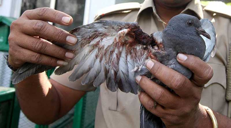 PETA demands ban on kite string