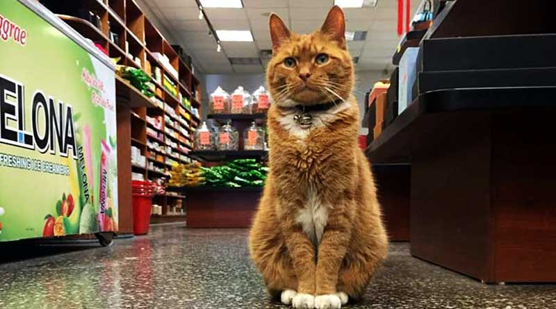 Cat runs store for 9 years without a day off