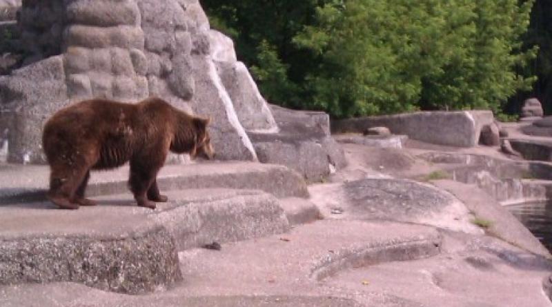 Bear in Poland Zoo Finds A World War II Mortar