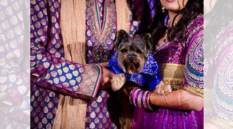 Bengaluru Woman rejected to marry a guy as he dosen't like her Dog