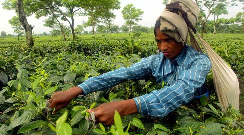 Tea estate manager brutally murdered