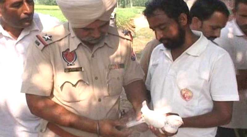 Spy pigeon in Punjab raised doubts of further attack