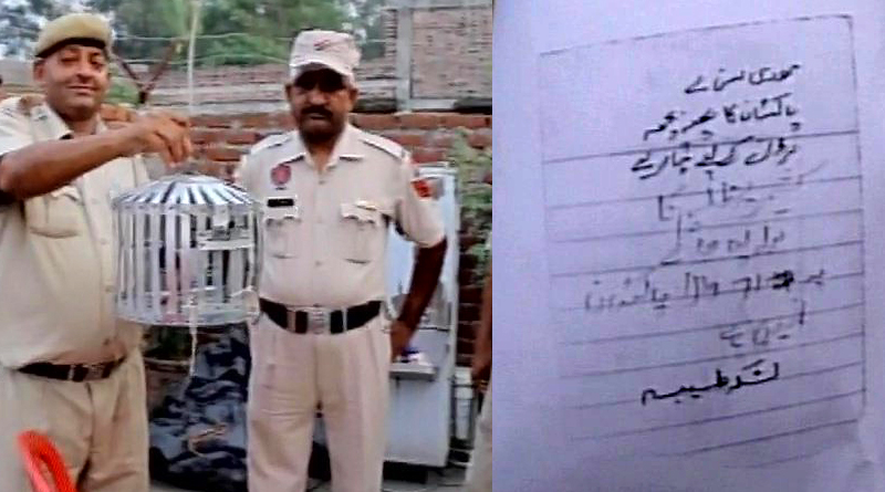 A pigeon with a threat letter found in Pathankot