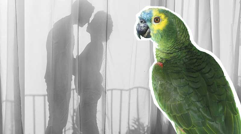 Parrot exposing husband