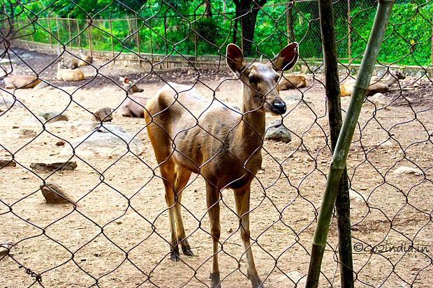 b-taptapani-deer