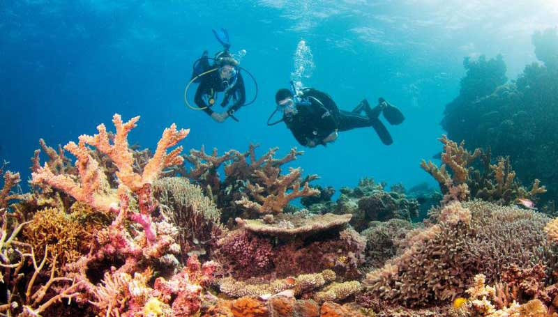 Life of Coral reef under threats