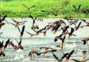 রসিকবিল: সপ্তাহান্তের উড়াননামা