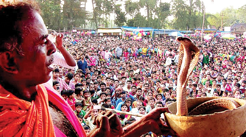 Snake Fest Charms Villagers In Midnapore, West Bengal