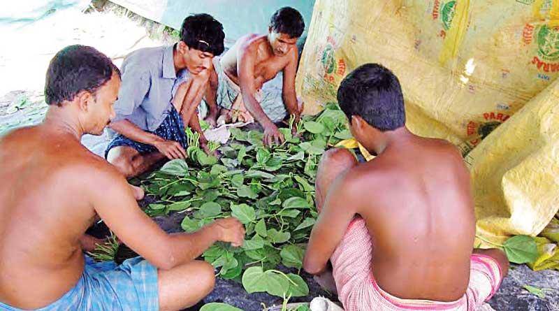 Betel-Leaves Export is in danger