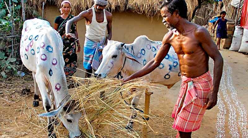 The custom of cow marriage in Bankura