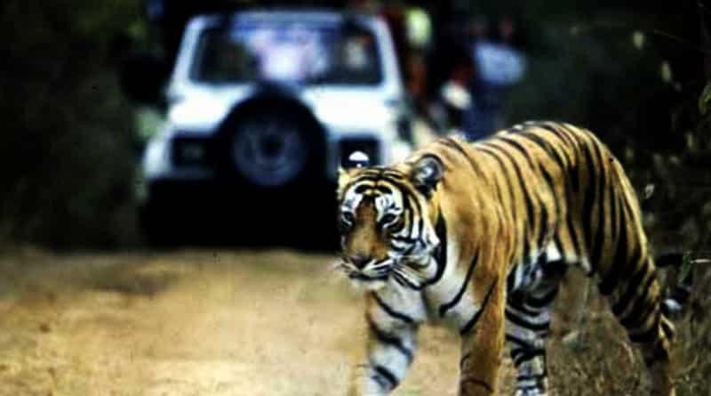 Jungle safari can be start from December in Siliguri