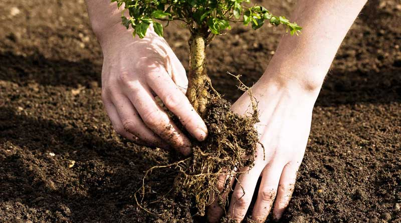 More tree plantation for a better environment