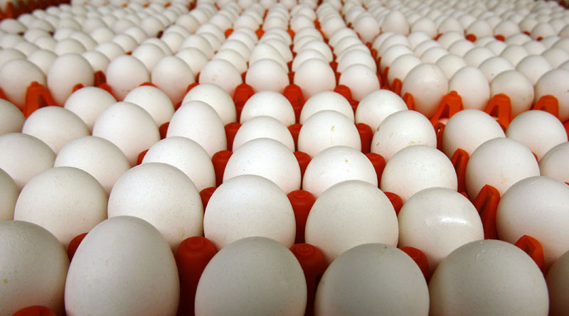 Egg price is high despite enough supply