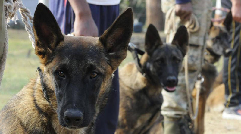 Canines responsible for White House security will now guard MP Jungles