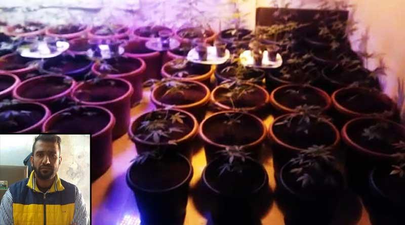 Marijuana Nursery in Hyderabad Stuns Cops, Man Arrested