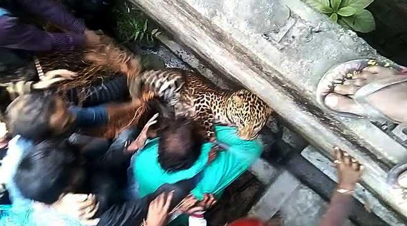 raigunj-tiger