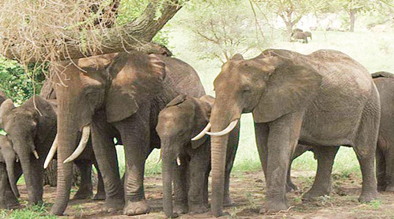 Kannada Koonki to tame Bengal tuskers