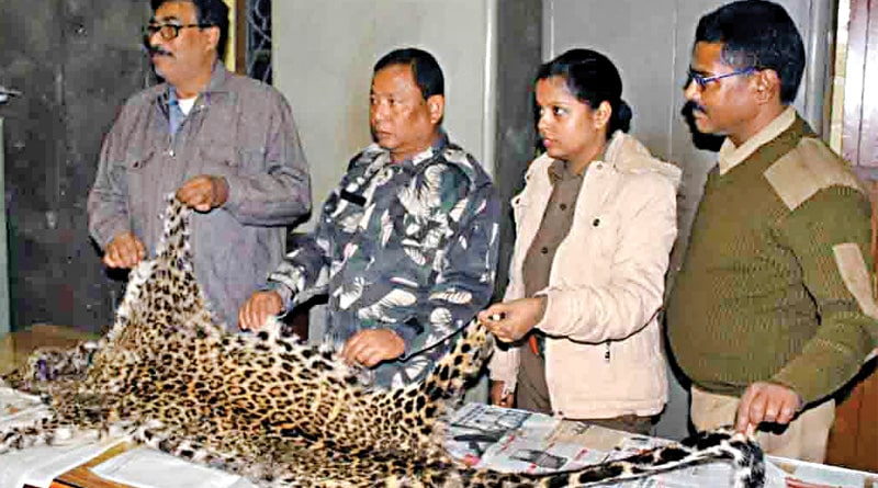 Leopard's meat is used for new year celebration!