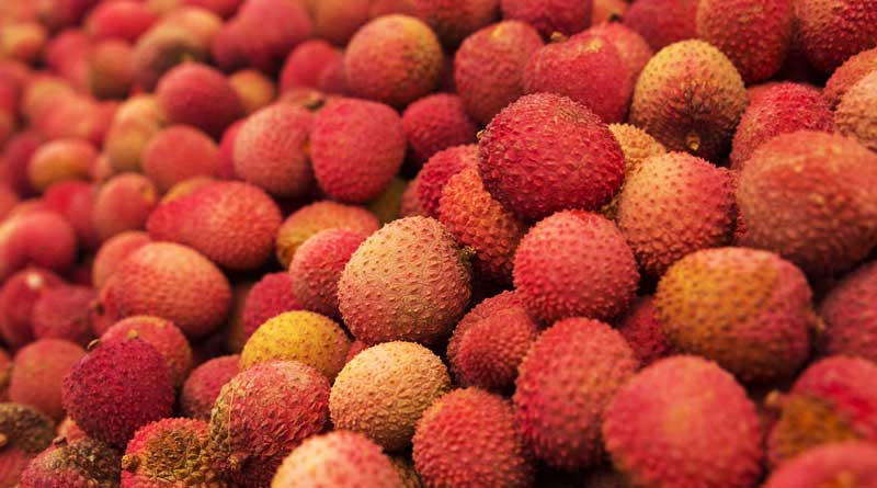 litchi responsible for Bihar mystery deaths, claims researchers