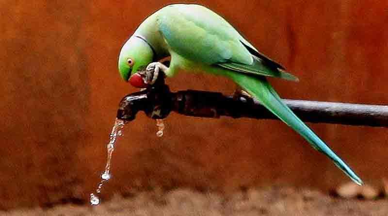 parrot_web