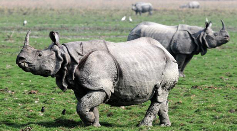 BBC is banned in Kaziranga Tiger Reserves forest for 5 years