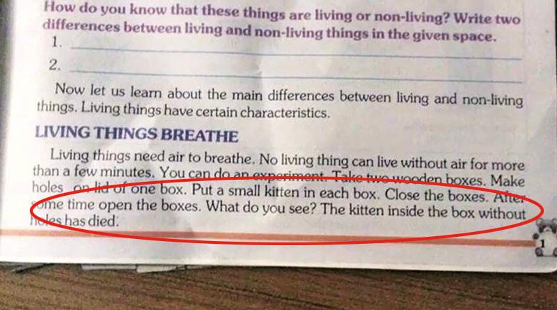 Kitten in a box 'textbooks' bizarre advice sparks furore