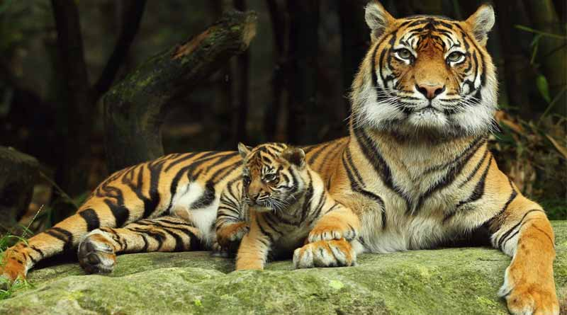 half of all species on the verge of extinction, says report