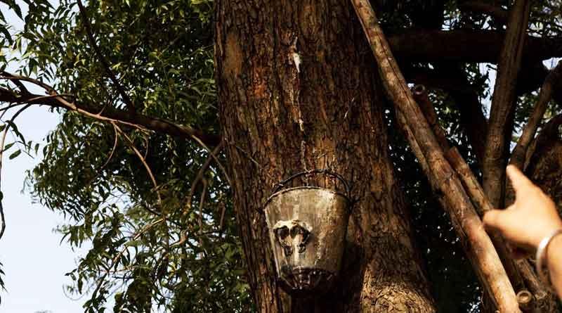 Neem tree dispensing 'Toddy' in Delhi University Campus