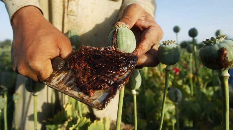 Masked under pharmaceutical trade Opium racket flourishing in North Bengal