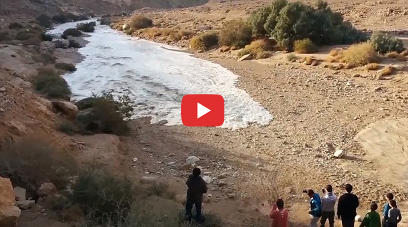Watch how Israel's Zin river comes back to life