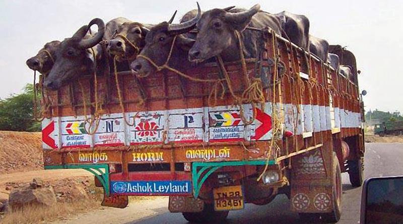 Men transporting buffaloes attacked near Kalkaji Mandir