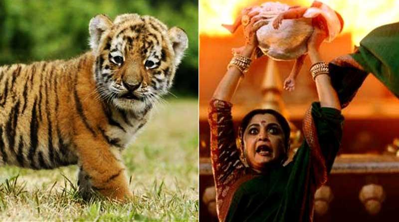 With a thunderous roar newborn 'Baahubali' roams Odisha zoo