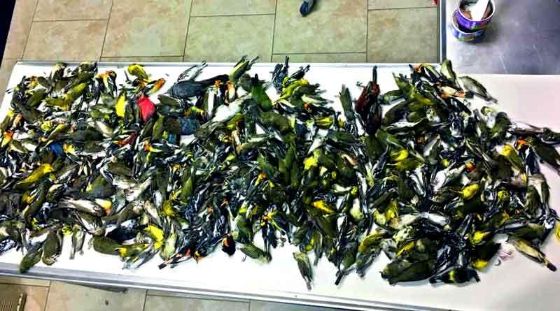 Heartbreaking!!! 400 birds die after flying into Texas skyscraper
