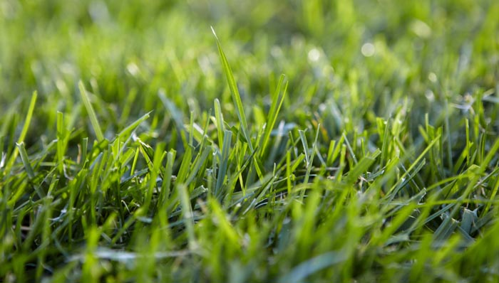 choose-the-right-grass-for-your-lawn-hero