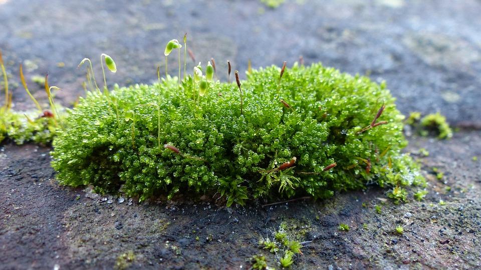 toxic-moss