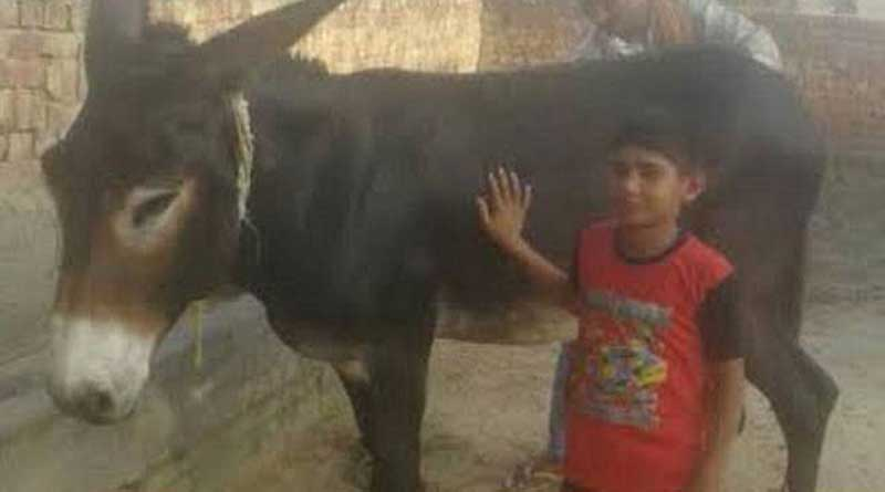 Haryana donkey on sale for Rs 10 lakh