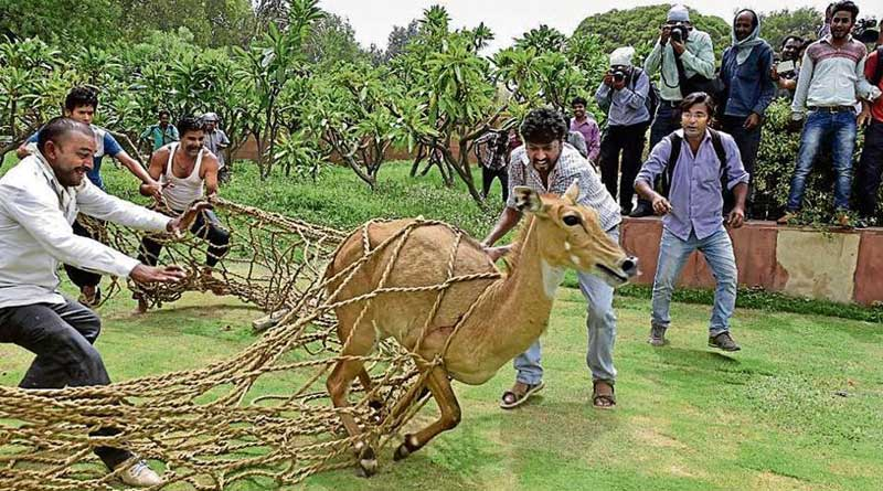 India likely to allow 'mercy killing' of wild animals