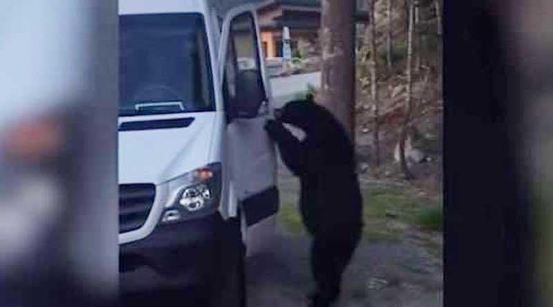 Bear vandalizes van, leaves with water bottle