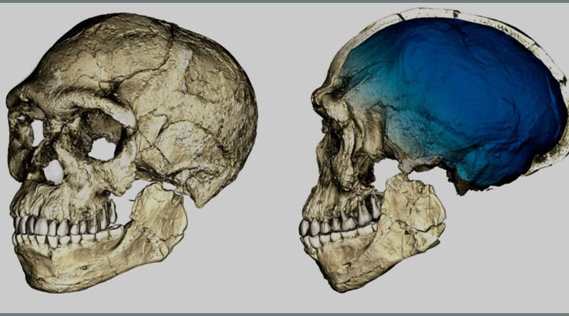 300,000 year old Moroccan fossils jolt theories of human origin