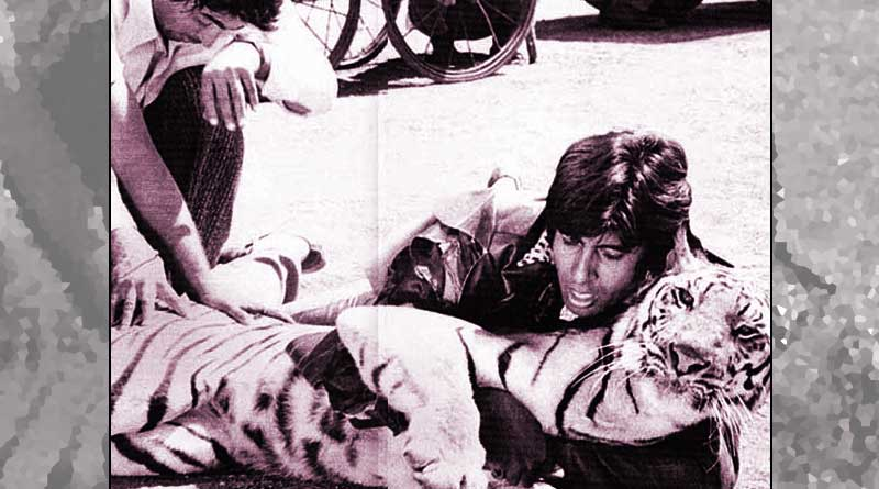 Big B wrestled with a real tiger in Khoon Pasina!