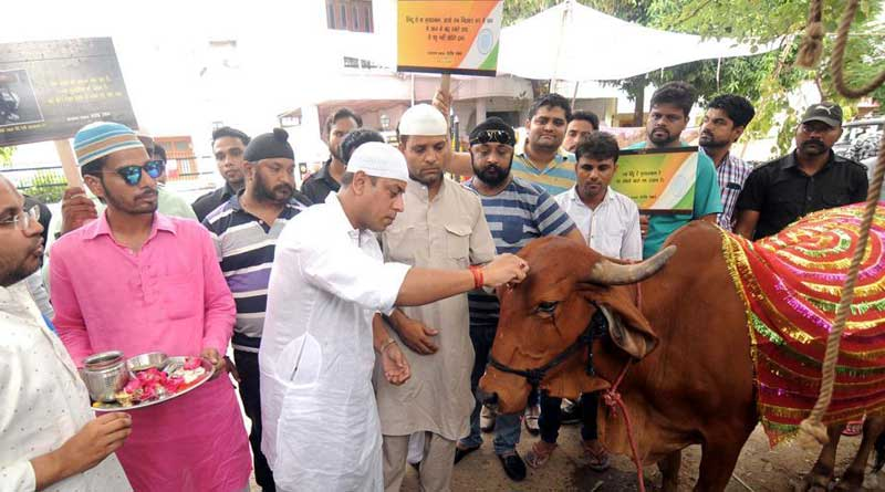 Muslim filmmaker adopts cow to convey a peace message