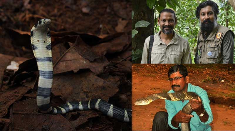 3 conservationists guard Cobra egg for 100 days, see pics